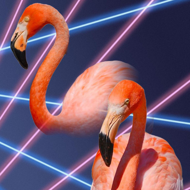 flamingos on space background