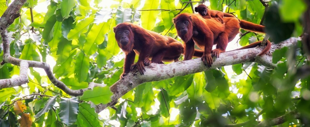 Monkeys and their baby on a tree
